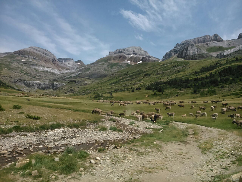 Aísa da nombre a uno de los valles más bellos y desconocidos del Pirineo aragonés. Abierto a través del río Estarrún, afluente del Aragón, se inserta en una amplia banda de suelos pardos calizos forestales sobre flysch eoceno.